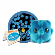 Common Cold/Rhinovirus